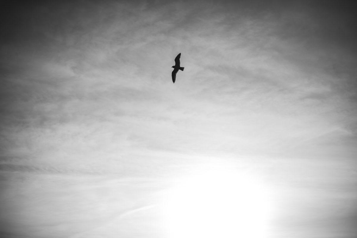Leon Bijelic - Wings of life