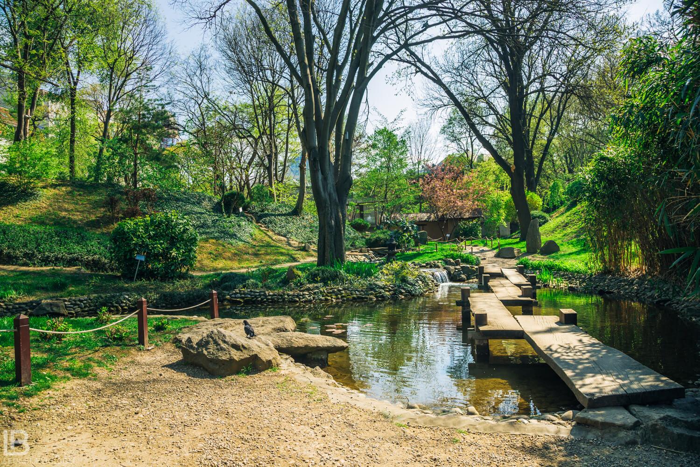 Botanička bašta Jevremovac, zaboravljeni raj u centru Beograda - Page 2 AJ2Q5395