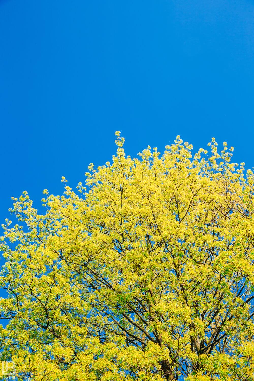 BEAUTIFUL SPRING PHOTOS 2019 – FLOWERS / BY PHOTOGRAPHER LEON BIJELIC / HAMBURG - BANJA LUKA - BEOGRAD - BELGRADE - STUTTGART
